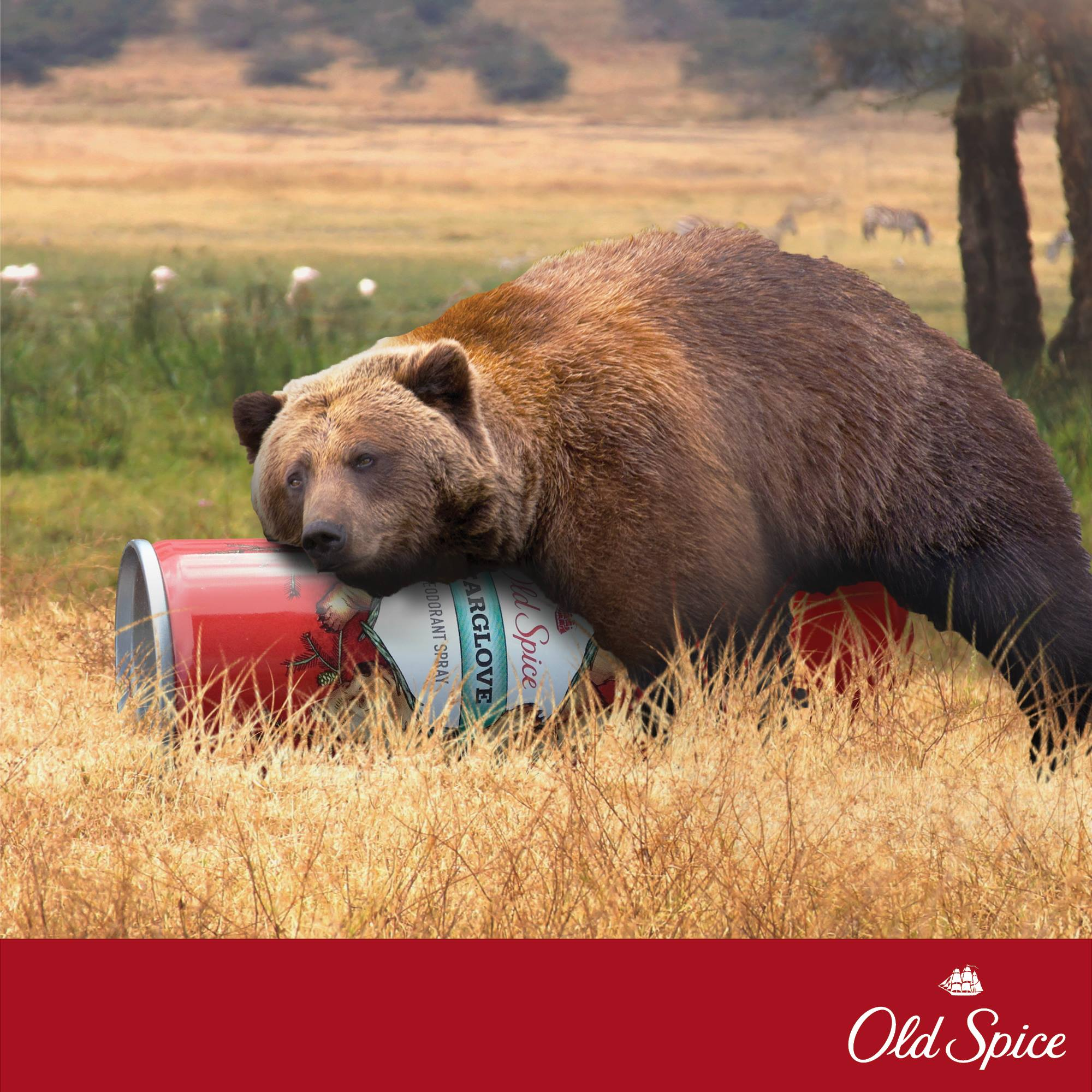 Gorilla social media marketing campaign poster of a bear taking down a can of Old Spice deodorant